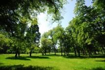 stromovka2.jpg - Šlechtovka