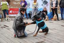 1L8A2337.jpg - Na akci se předvádějí i psi z útulků, kteří jsou volní k adopci.