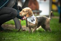 Soutezici.jpg - Přihlášení psi dostávají fešný šátek se soutěžním číslem.