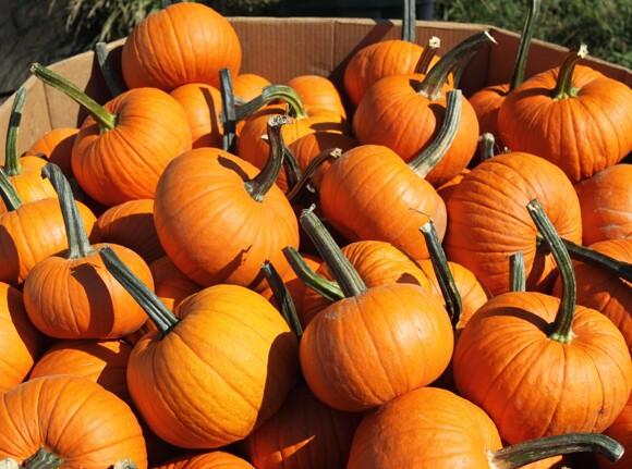pumpkins-1622618.jpg