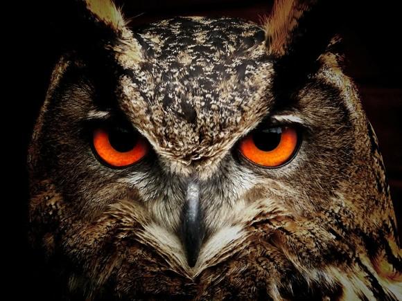 clanky5/owl-50267_1280.jpg