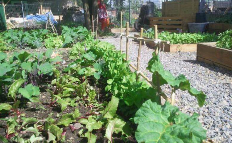 Komunitní zahrada Krejcárek