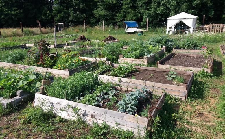 Komunitní zahrada Pastvina