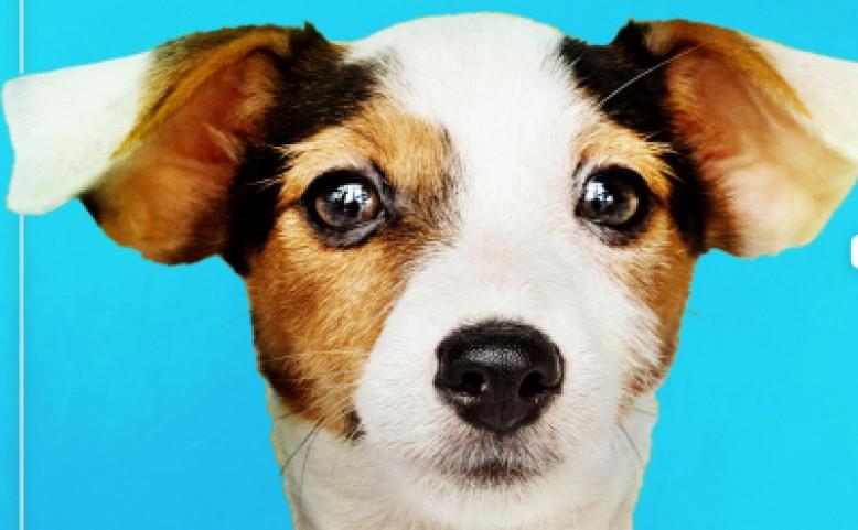 Animals in need - Benefice pro psí útulek