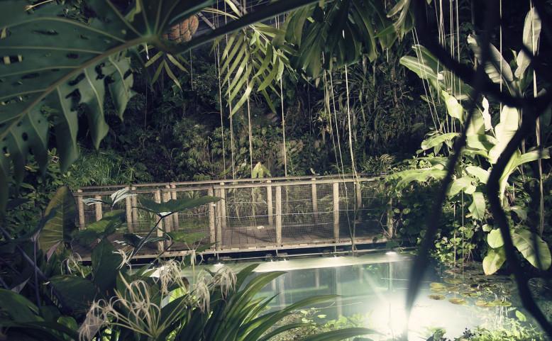 Džungle, která nespí