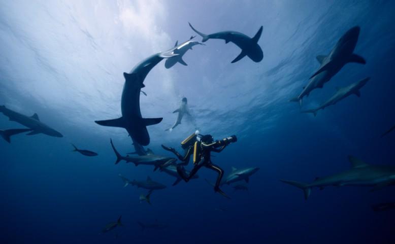 Jacques-Yves Cousteau: Odysea - Premiérový víkend