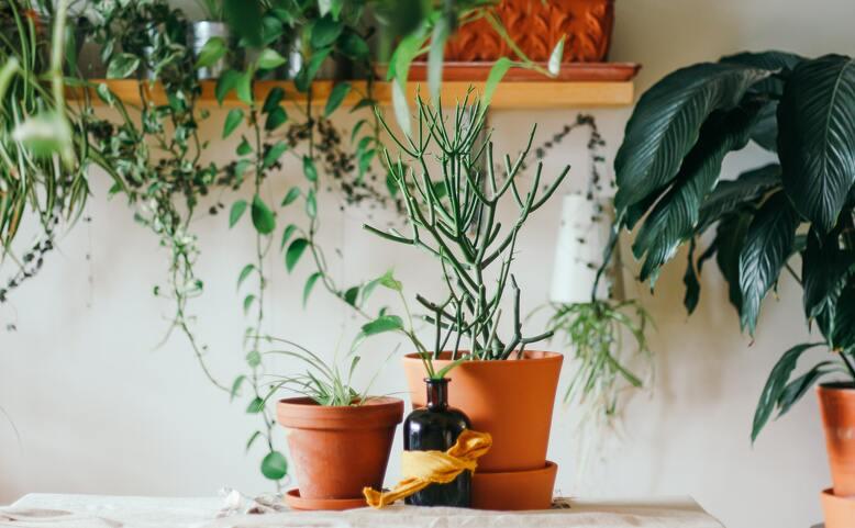 Výměna rostlin / Plant Swap