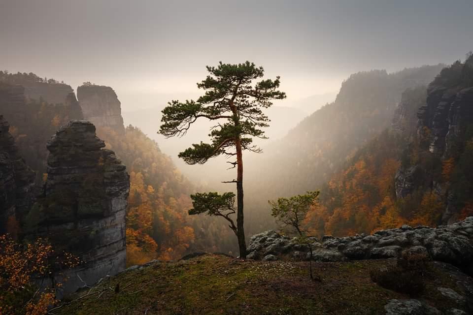 Světově první fotografie, ze kterých vyroste les