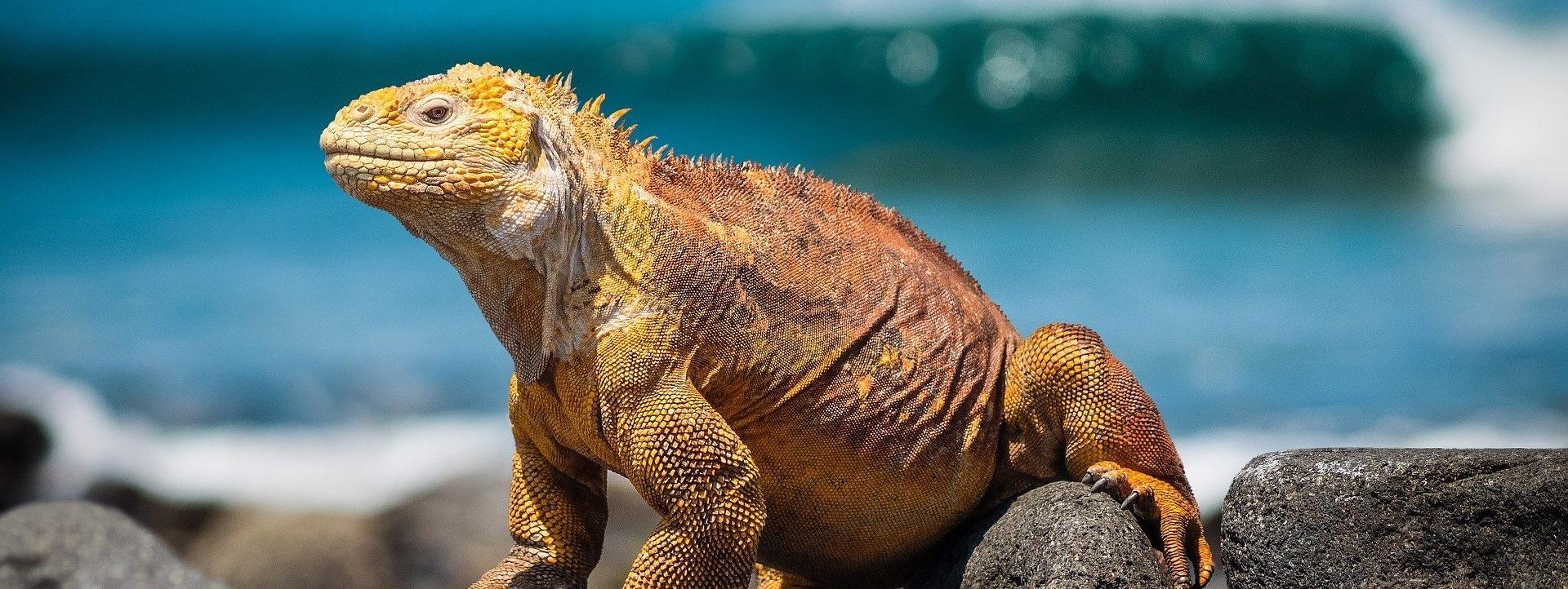 ONLINE: Galapágy s biologem