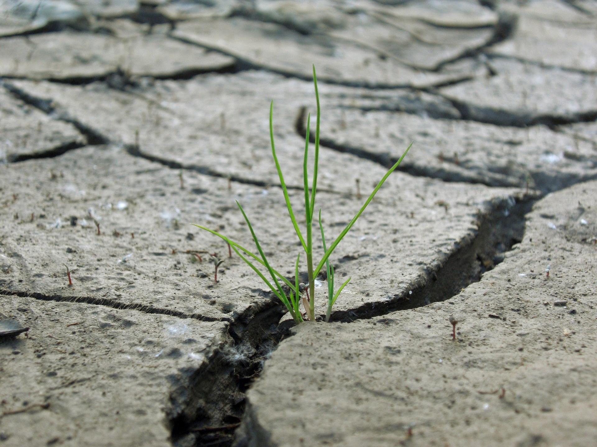 Online: Osobnostní rozvoj a posttraumatický růst
