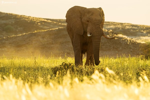ONLINE: Divoká zvířata a krajina Namibie