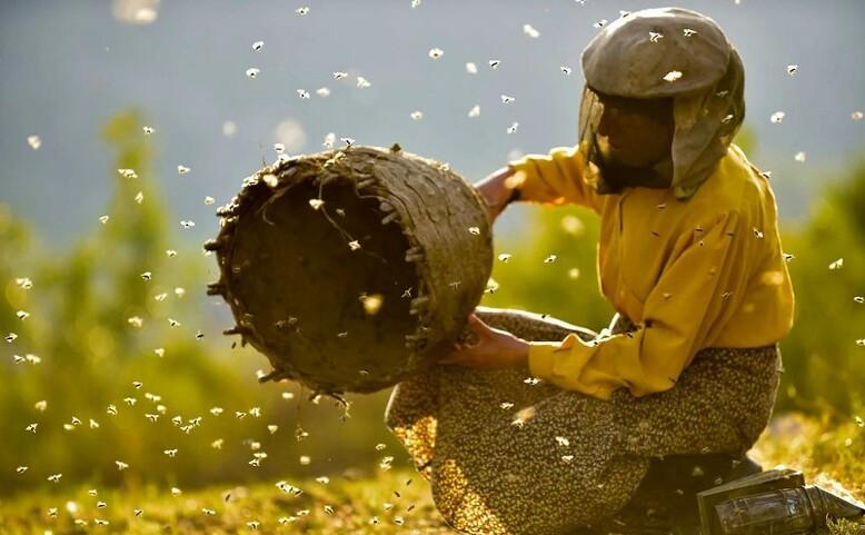 Autokino: Země medu