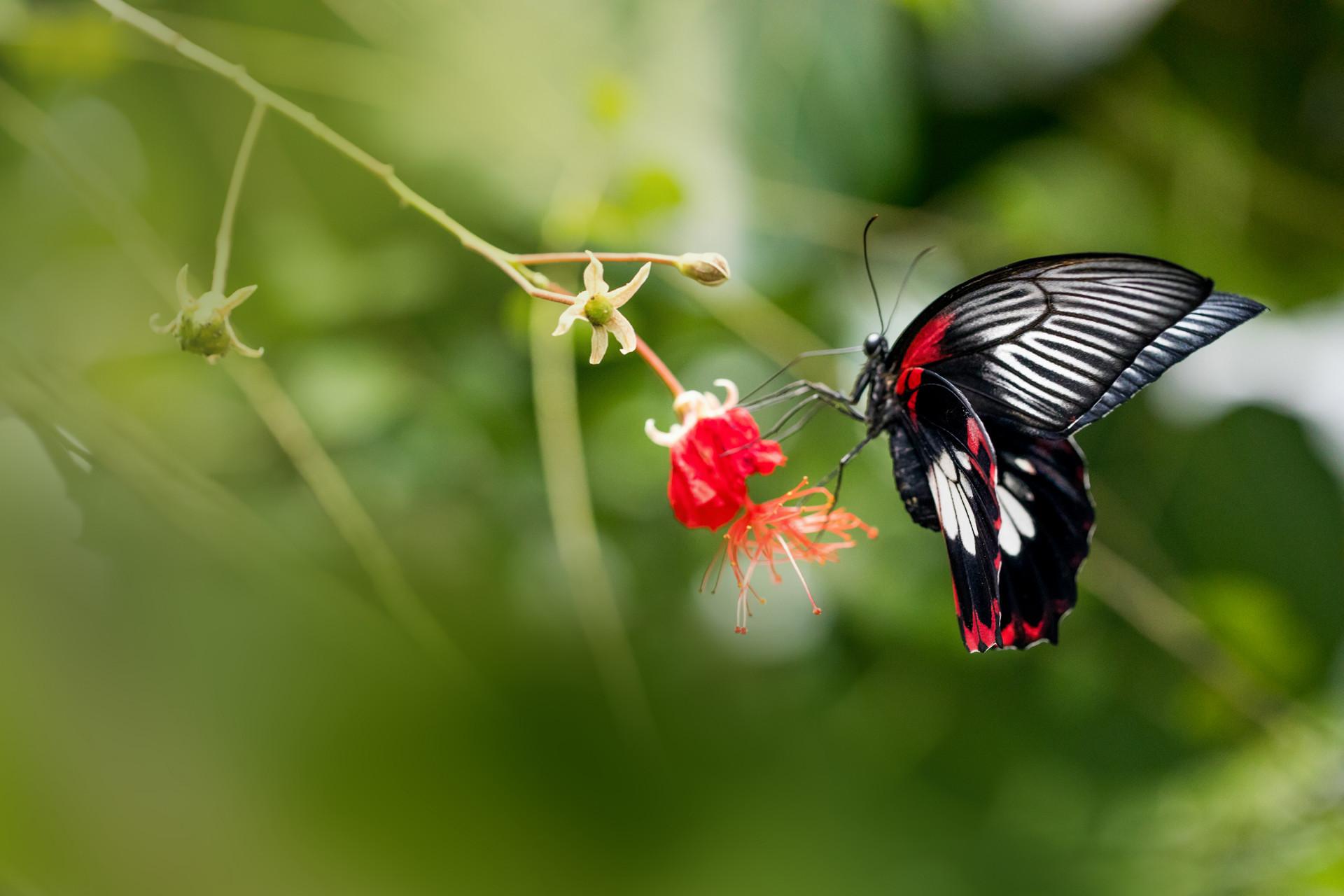 Motýli - jedovatá krása