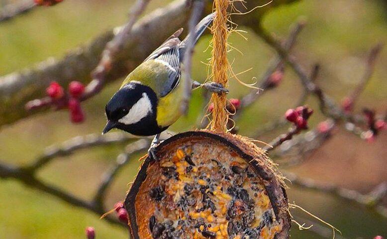 Jak krmit ptáky?