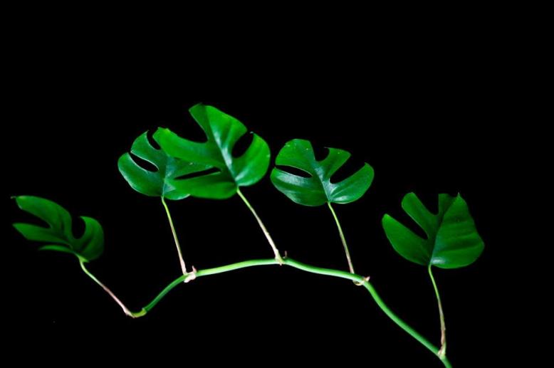 Plant swap with Haenke