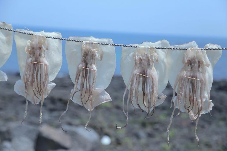 Kalamáry a chobotnice
