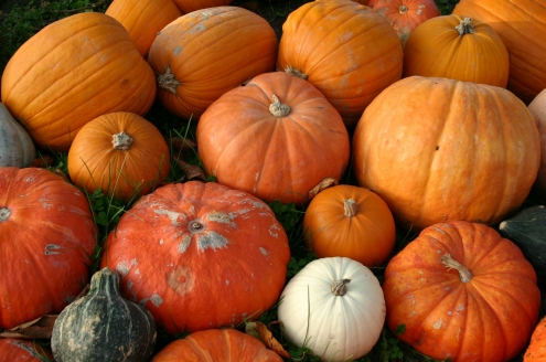 Dýňové slavnosti aneb Halloween.