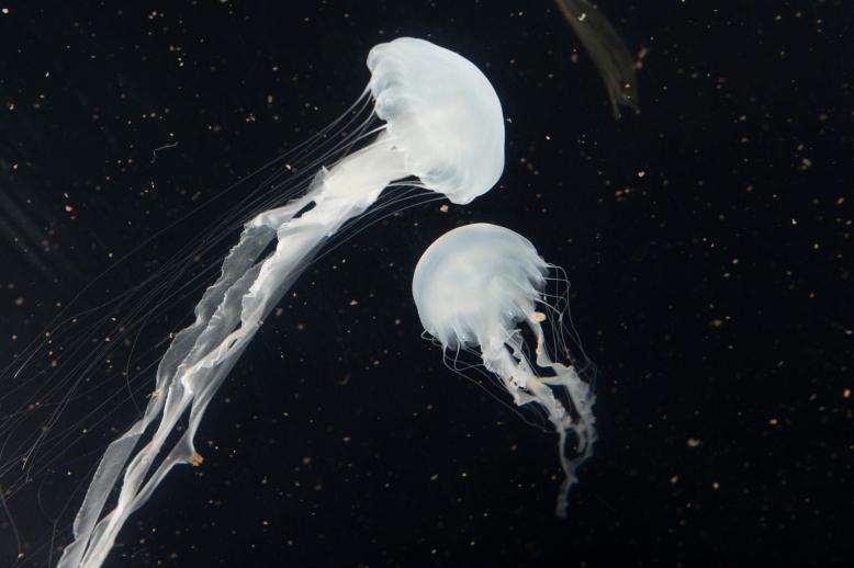 Svět medúz - první otevřený den