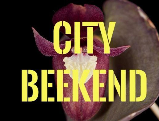 [clanky5/orchidejok-2.jpg]