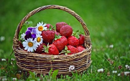 [strawberries3-1-clanek.jpg]